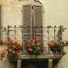 イタリアの愛情